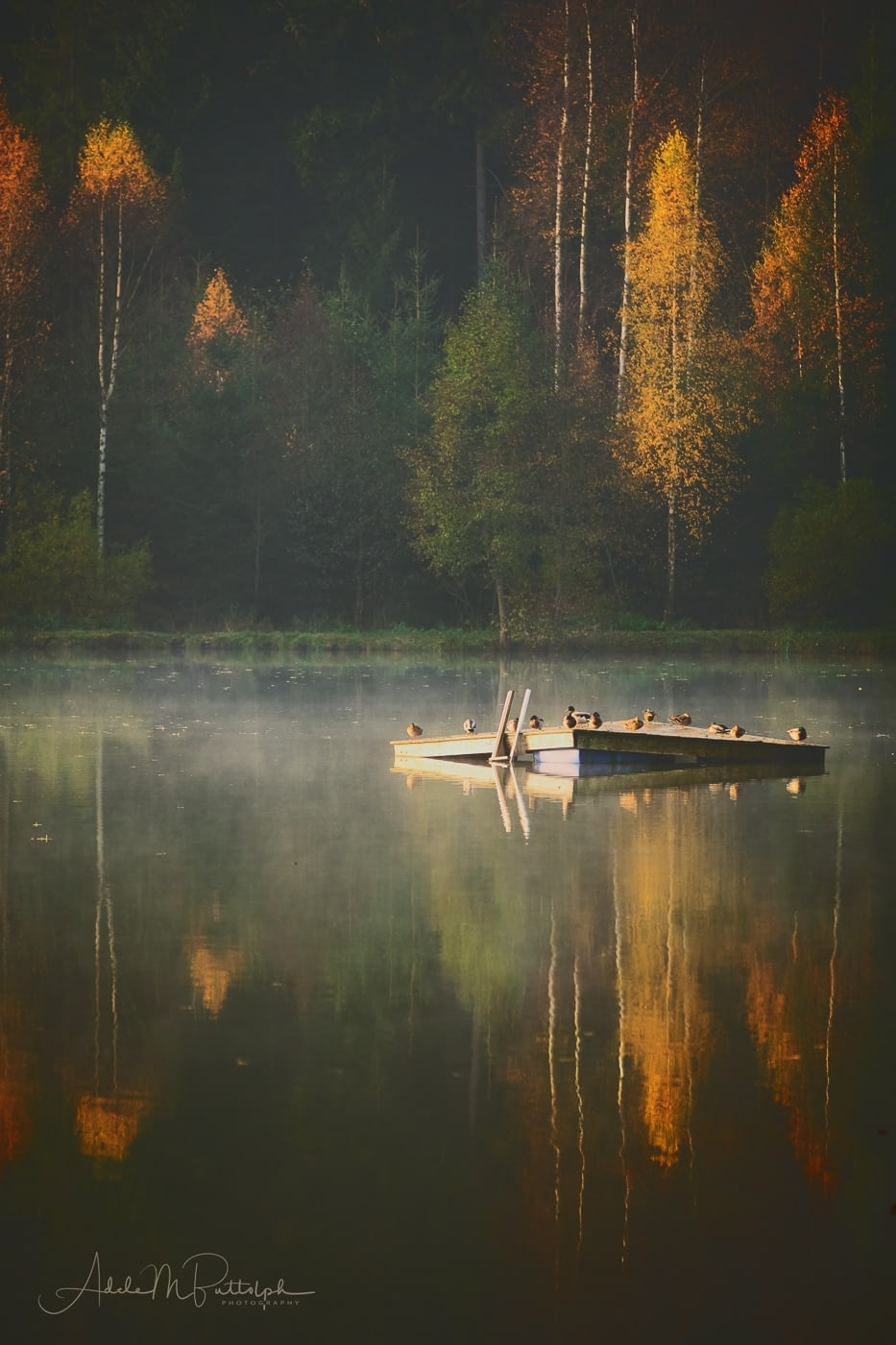 Autumn Morning on a lake in the Czech Republic. Ducks on a small dock add interest to the scene.