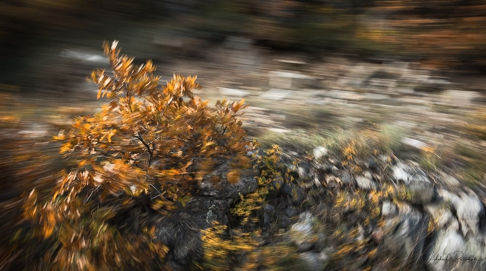 Camera motion photograph of a small tree captured during the autumn. Image appears to swirl about the orange-leaved tree.