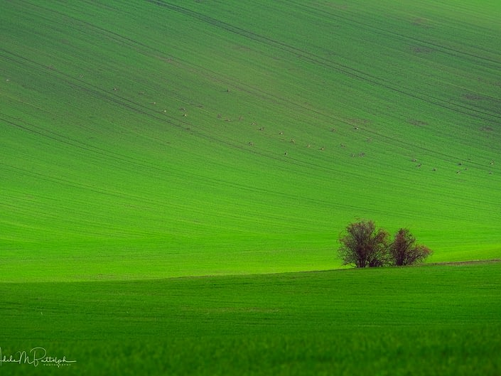 Green Field Moravia Czech Republic