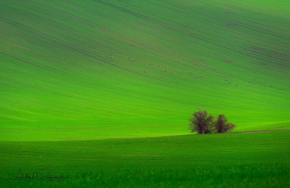 Wave of Green, Moravia by Adele Buttolph