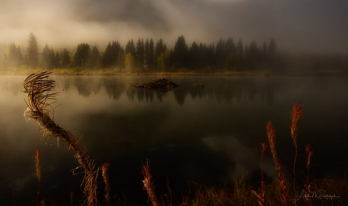 Morning mist softens a pond with a beaver house near Marble, Colorado.