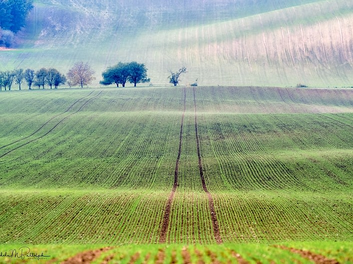 Field in Moravia, Czech Republic