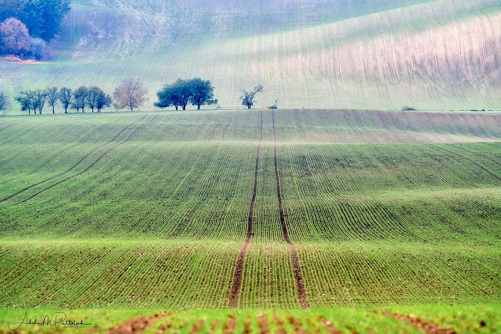 Field in Moravia, Czech Republic