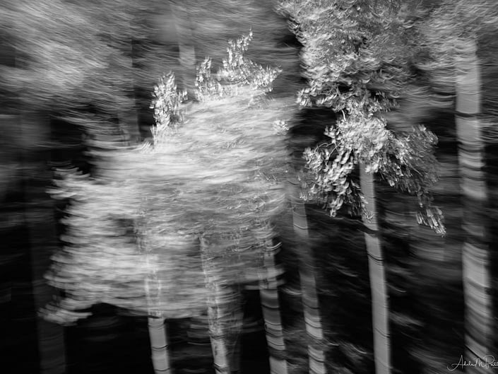 Black and white intentional camera movement photograph of aspen shot in Colorado.