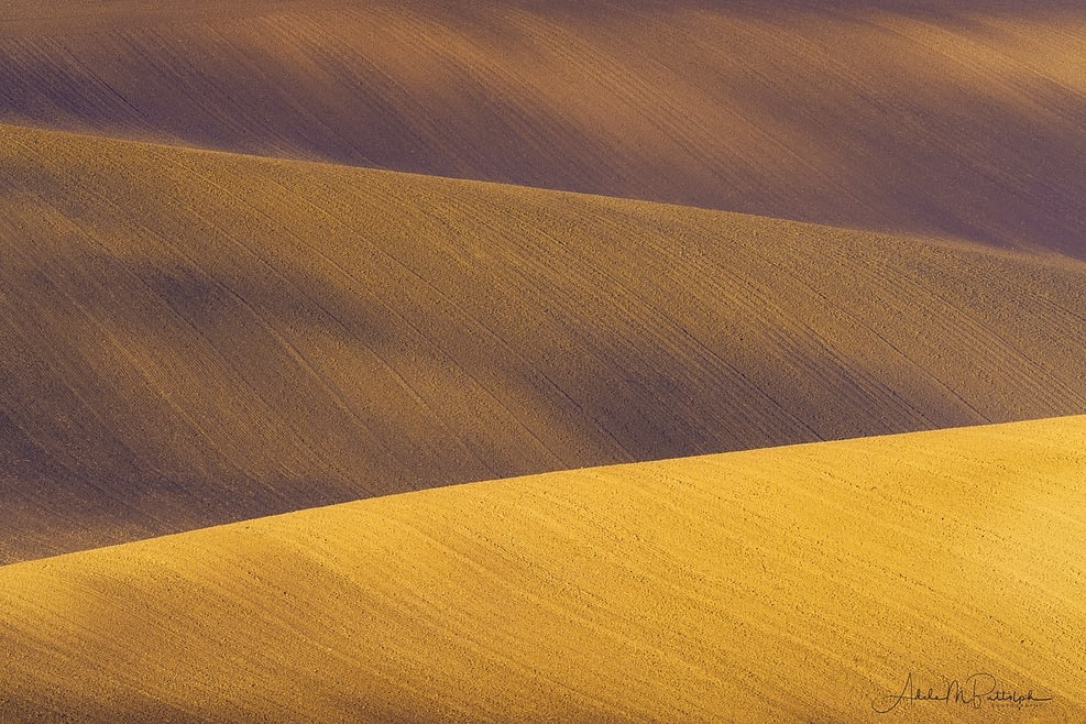 Gold Fields Abstract, Moravia by Adele Buttolph