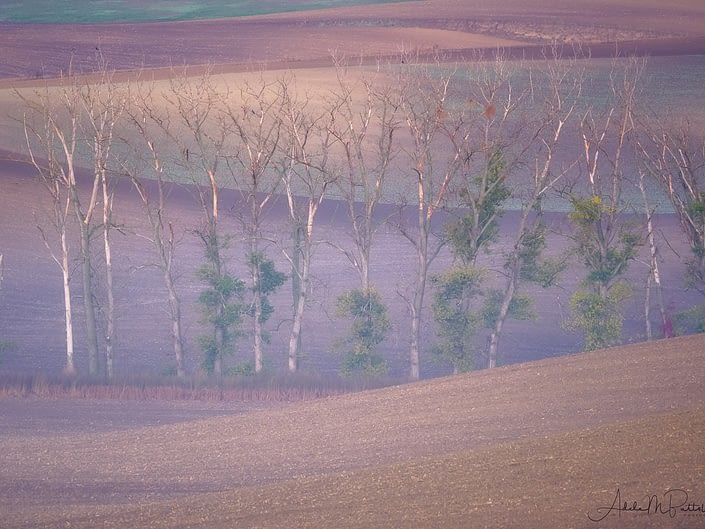 Trees Moravia Czech Republic