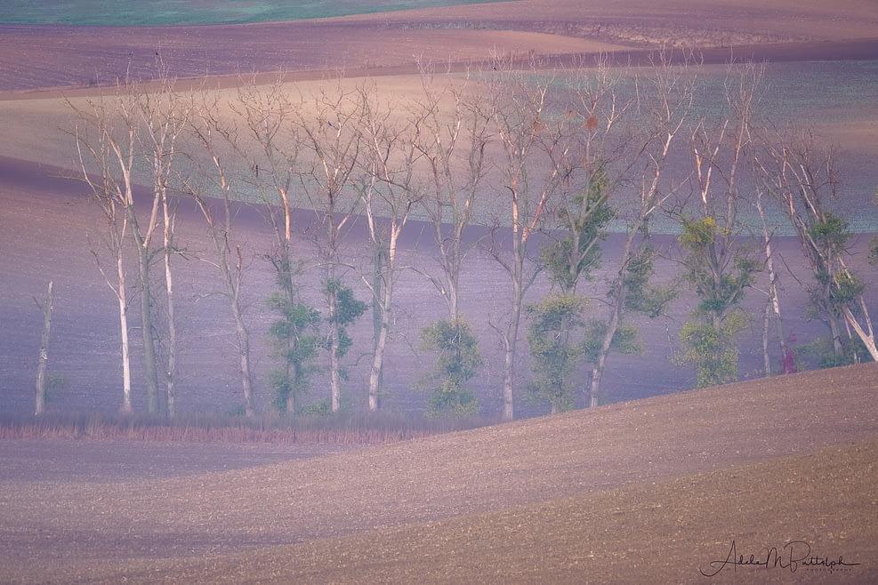 Trees Moravia Czech Republic