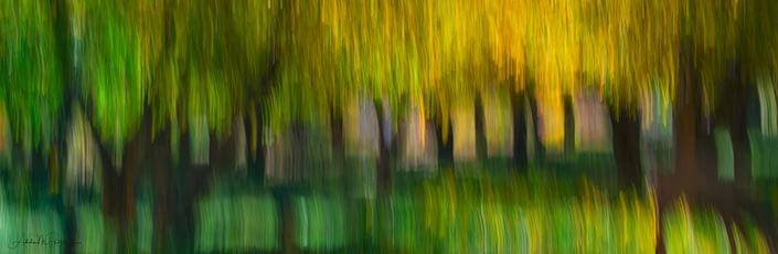 Impressionistic photograph of Fruita apple orchard during the autumn. Image shot at Capitol Reef National Park, Utah.